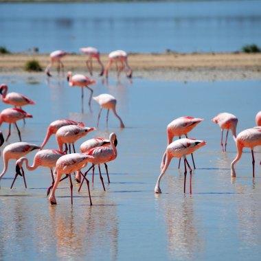 Flamingoes-at-Walvis-Bay