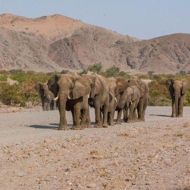 Namibia Endemics Birding Tour