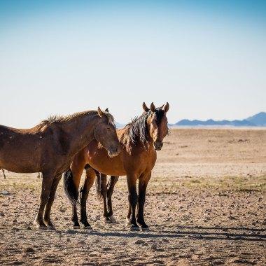 visit-southern-namibia