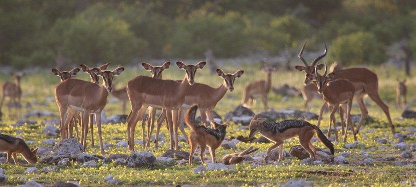 Popular Namibia Safaris