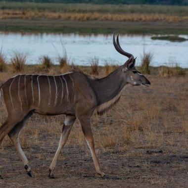 Safari Namibia Botswana Zimbabwe