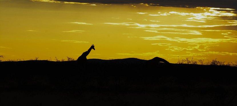 Western Namibia Safari