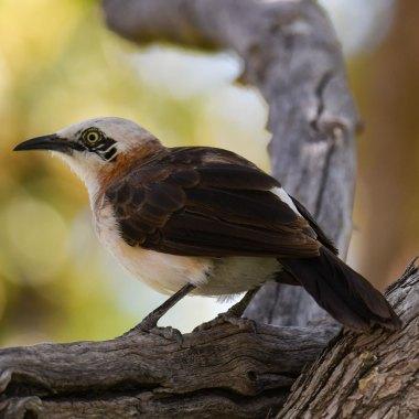 Namibia Mammal and Birding
