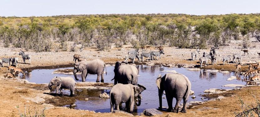 Namibia Getaway Safari