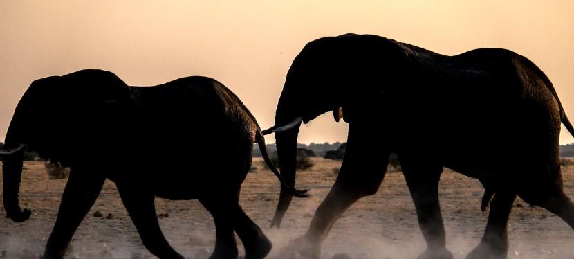 Kavango-Zambezi Wildlife Safari
