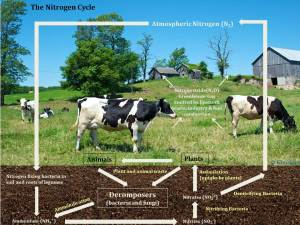 North Country nitrogen cycle diagram | Nature Up North