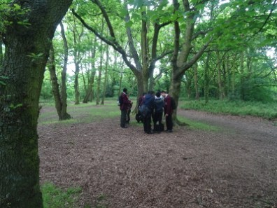 Students hunting for creepy crawly insects in woodland London Nature Vibezzz