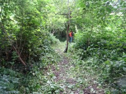Kingihts Hill Wood - Capital Clean Up day-4