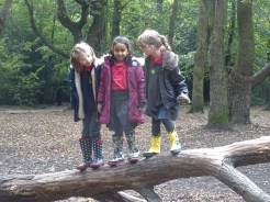 granton-primary-free-nature-school-forest-school-lambeth-16