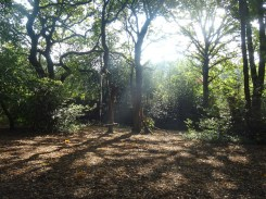 granton-primary-free-nature-school-forest-school-lambeth-3