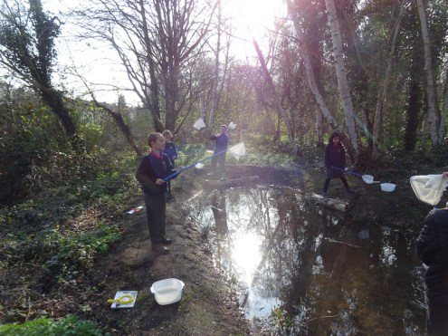 Granton Primary Year 5 students pond dipping Lambeth-1