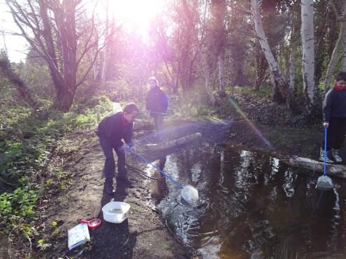 Granton Primary Year 5 students pond dipping Lambeth-9