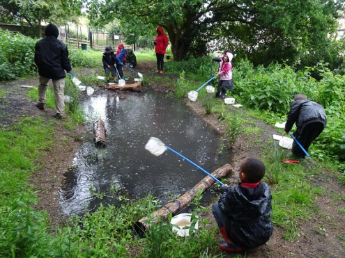 after school club pond dipping Lambeth London-6