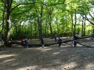 Free after school forest school Fern Lodge Streatham Common Lambeth London-18