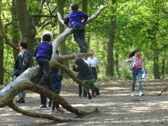 Free after school forest school Fern Lodge Streatham Common Lambeth London-4