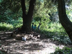 Free family nature activity Knights Hill Wood West Norwood Lambeth London-8