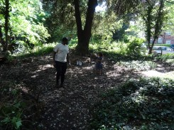 Free family nature Knights Hill Wood West Norwood Lambeth London-5