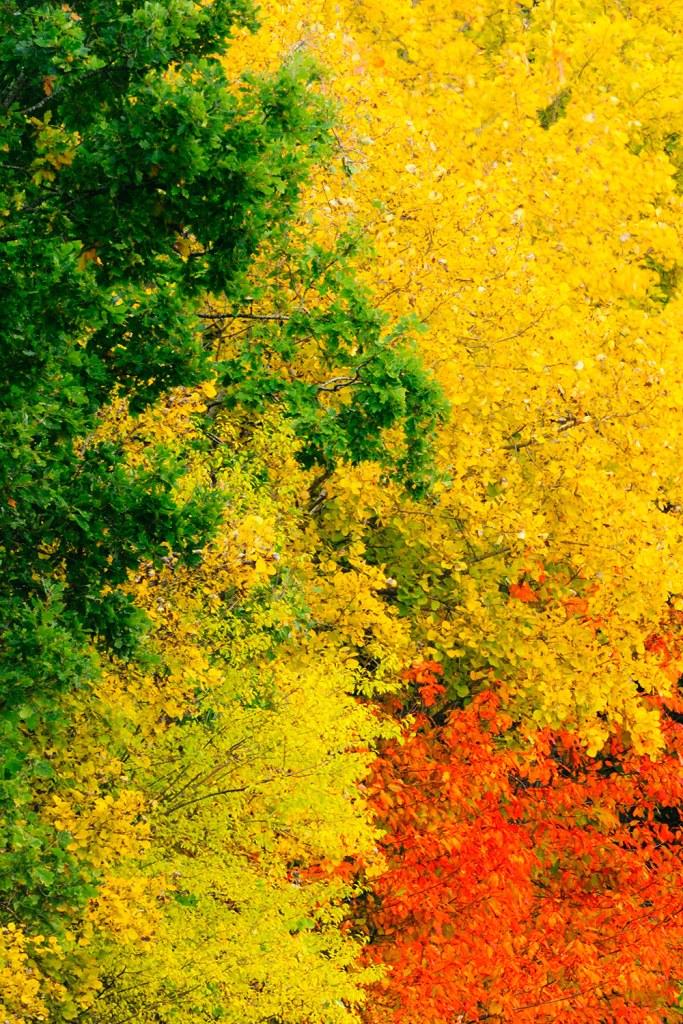 Efterårsfarver i skoven