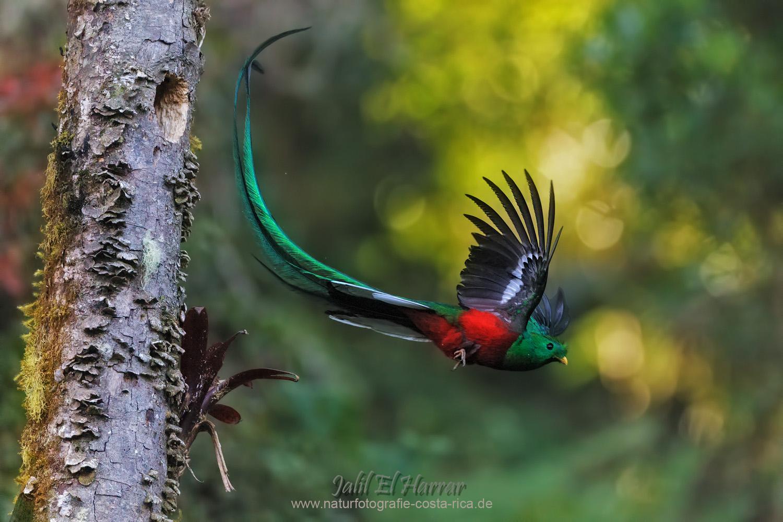 Quetzal Forum Fr Naturfotografen