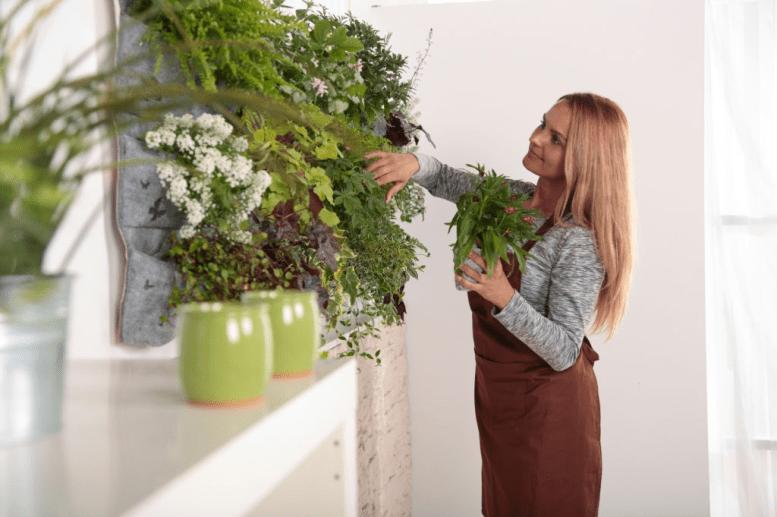 como cuidar las plantas del hogar en cuarentena