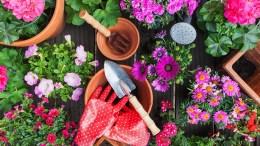 Ejemplos de flores ornamentales