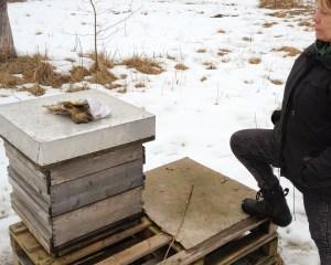 Karin&Hive