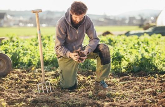 Jardinier soja