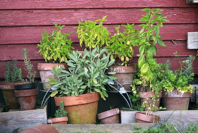 Pots de plantes aromatiques Naturopathe&Vous