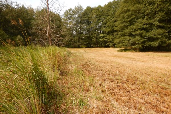 Ende der Landschaftspflegearbeiten im Jahr 2019