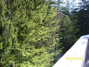 BayerischerWald-Baumwipfelpfad
