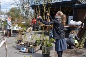 Pileflet til haven @ Naturplanteskolen | Hedehusene | Danmark
