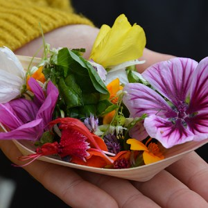 Fantasilat-event: Spiselige blomster og blomsterbede @ Naturplanteskolen | Hedehusene | Danmark