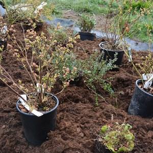 Plantningsdag @ Naturplanteskolen | Hedehusene | Danmark
