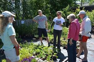 Aftenrundvisning i haverne og på planteskolen @ Naturplanteskolen | Hedehusene | Danmark