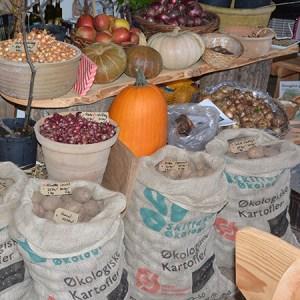 Lær at dyrke gravefrie kartofler @ Naturplanteskolen | Hedehusene | Danmark