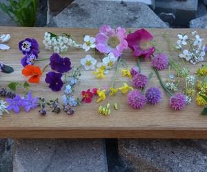 Masser af spiselige blomster fra Naturplanteskolen