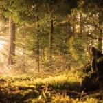 schwarzwald bild