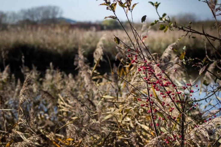 naturschutzgebeit reinheimer teich
