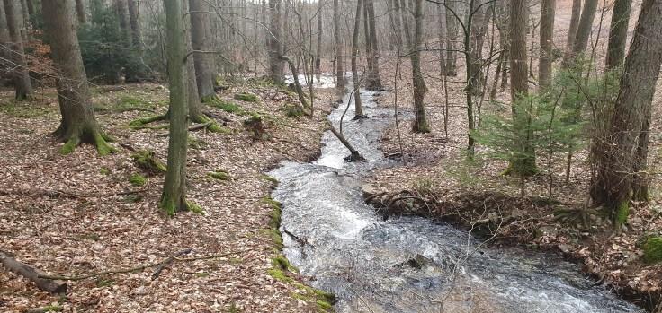 naturschuzgebiet silberbachtal bei schlossborn
