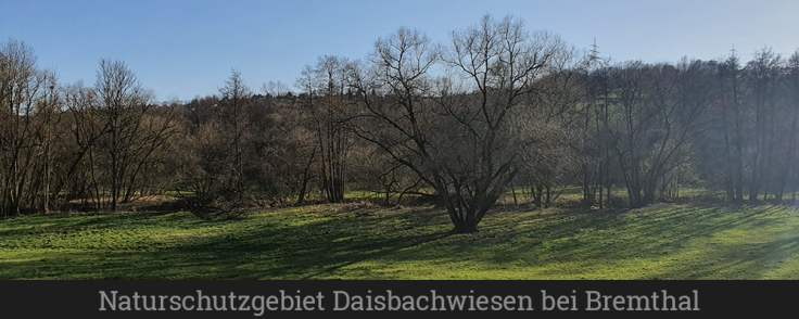 Naturschutzgebiet Daisbachwiesen bei Bremthal (1)