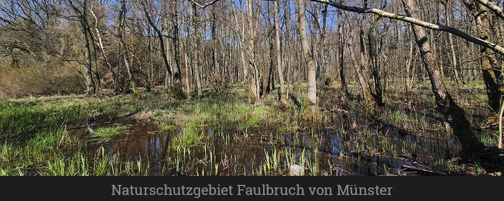 Naturschutzgebiet Faulbruch von Münster