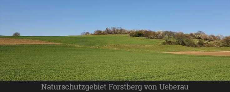 Naturschutzgebiet Forstberg von Ueberau