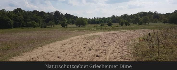 Naturschutzgebiet Griesheimer Düne