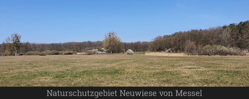 Naturschutzgebiet Neuwiese von Messel (1)
