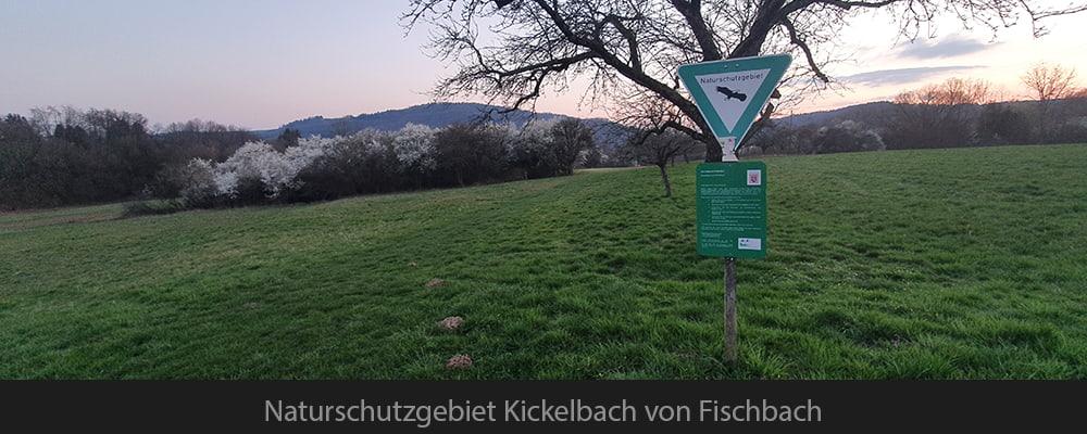 Naturschutzgebiet Kickelbach von Fischbach