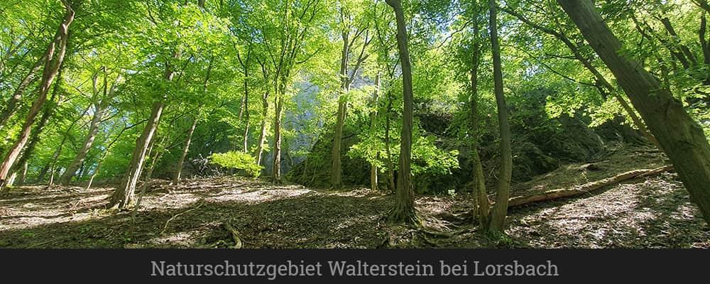 Naturschutzgebiet Walterstein bei Lorsbach (1)