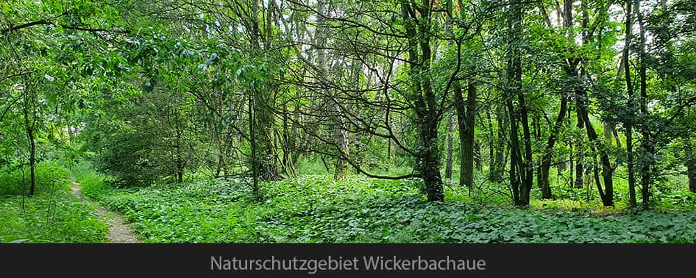 Naturschutzgebiet Wickerbachaue
