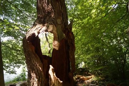 Baum Naturpark Barnim