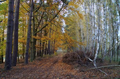 Naturpark Barnim Wald