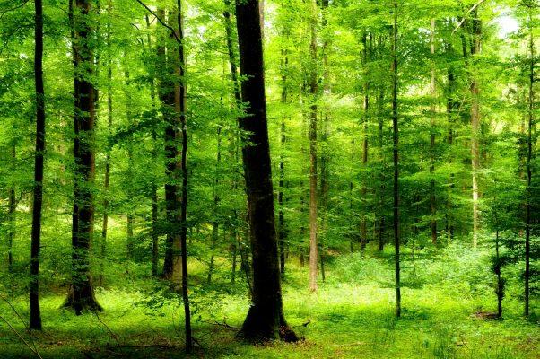 Nationalpark Spessart Forstleute fordern Nationalpark